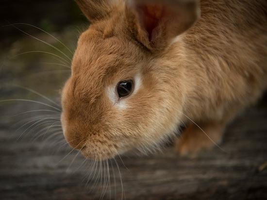 Завлек кроликом: эксперт рассказал, как уберечь ребенка от педофила