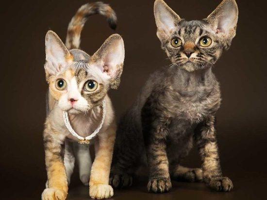В отличие от остальной России, новосибирцы предпочитают собак кошкам