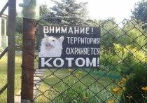 Шесть очень странных штрафов в Петербурге
