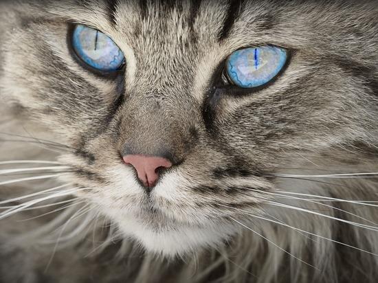 Барнаул — в тройке лидеров городов по индексу популярности кошек