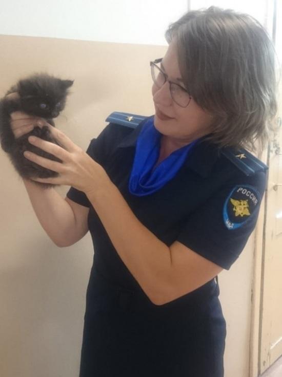 Полицейские спасли котенка на оживленной трассе