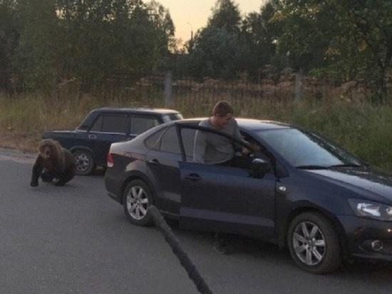 В центре Архангельска казнили медвежонка
