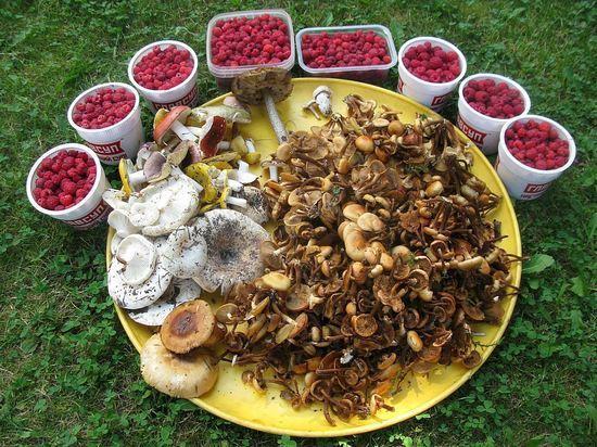 В лес за грибами для салата и соления