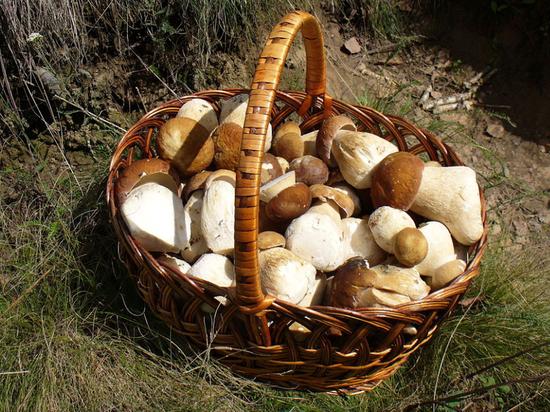 Калужские полицейские спасли заблудившихся грибников