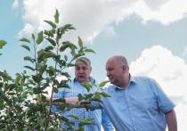 Ставрополье внедряет практику 100% «доморощенных» фруктовых садов