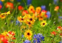 В Тверской области пройдет выставка живых цветов