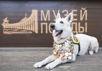 Алтайские музеи присоединились к всероссийской акции «День фронтовой собаки»