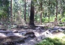 Лесной пожар чуть не дошел до Подборок