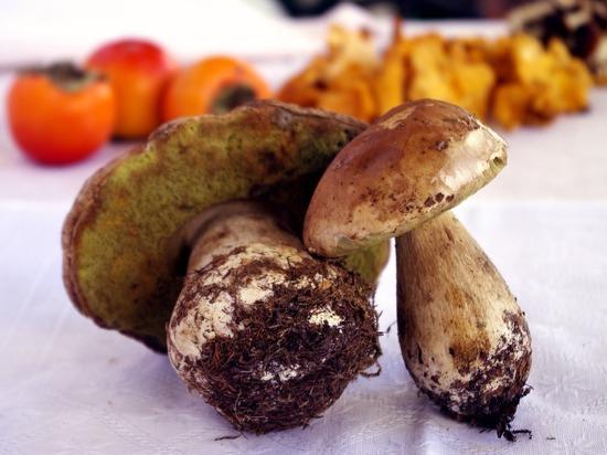 Украинцы отравились грибами в Свято-Никольском монастыре в Крыму