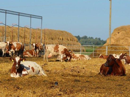 В Подосиновском районе открылась новая товарно-молочная ферма