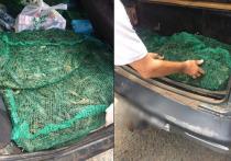 В Оренбуржье не разрешили завезти 120 килограммов  раков из Казахстана