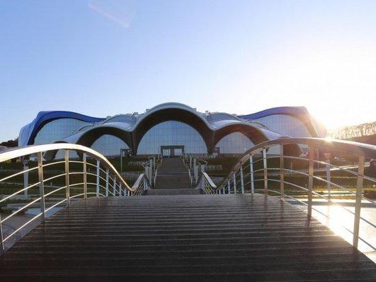 Скат по имени Сережа появился в Приморском океанариуме