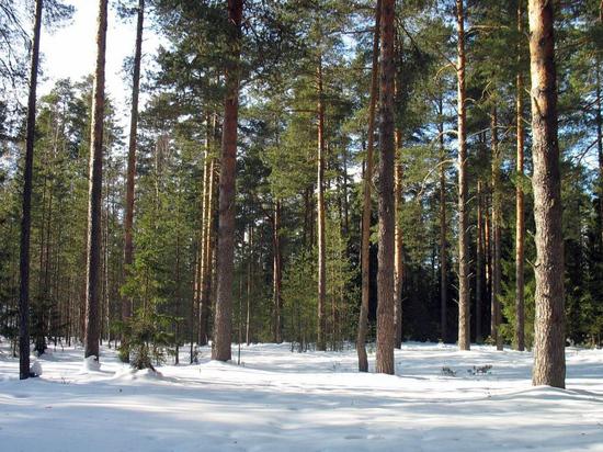 Лесной план Кировской области выставлен на общественное обсуждение