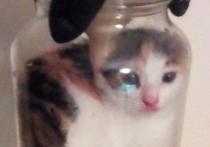 Сварил живьем котенка: живодер рассылает зоозащитникам видео издевательств над животными