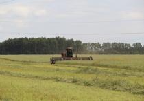 Растениеводство и животноводство в ОА «Племрепродуктор «Чистюньский» —  отрасли взаимосвязанные