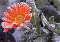По северу Оренбуржья прогнозируются заморозки до -2°С