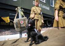 В Москве рассказали об уникальных собаках-героях