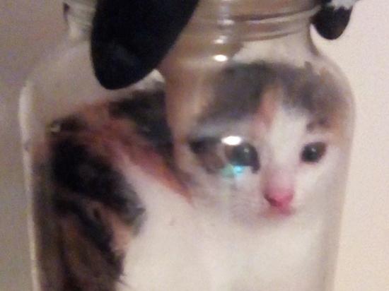 Хакеры вычислили сварившего живьем котенка живодера