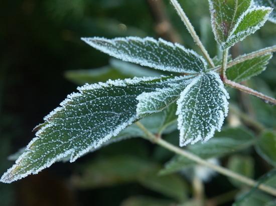 Ночные заморозки и июльская жара: какие сюрпризы готовит конец августа