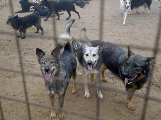 Депутаты предложили превратить собачьи приюты в контактные зоопарки
