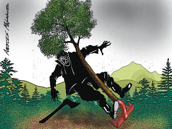 Лысая Россия: скоро весь наш лес увезут в Китай