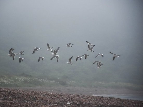 Синоптики Приморья озвучили прогноз погоды на ближайшие дни