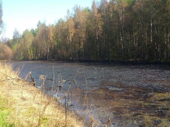 Экологическая катастрофа: в Ярославле обнаружили водоем из нефтепродуктов