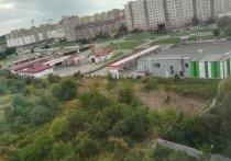В Калининграде для строительства многоэтажки вырубают яблочные сады