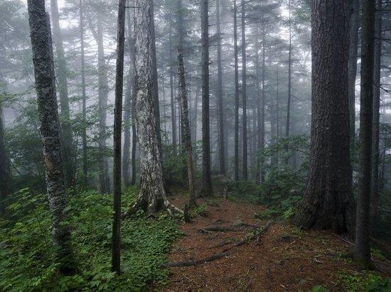 Заблудившихся подростков нашли в лесу в Приморье
