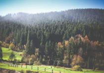 В Барнауле готовятся вырубить два гектара леса под вертолетную площадку и спорткомплекс