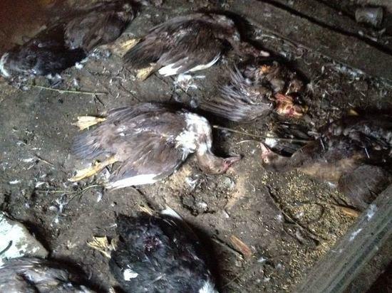 В Алтайском крае собаки задрали 297 домашних птиц в райцентре