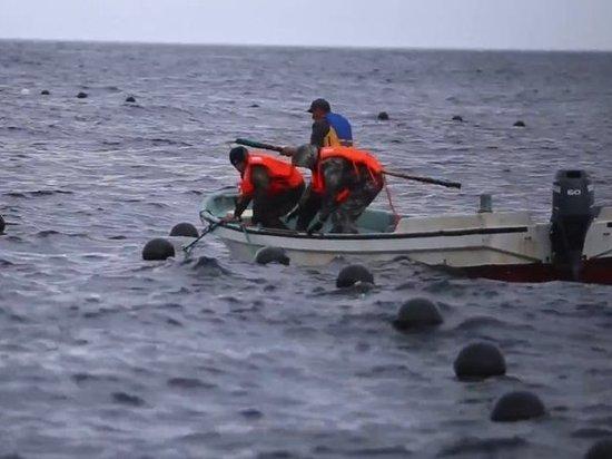Синоптики: новый тайфун надвигается на Приморье
