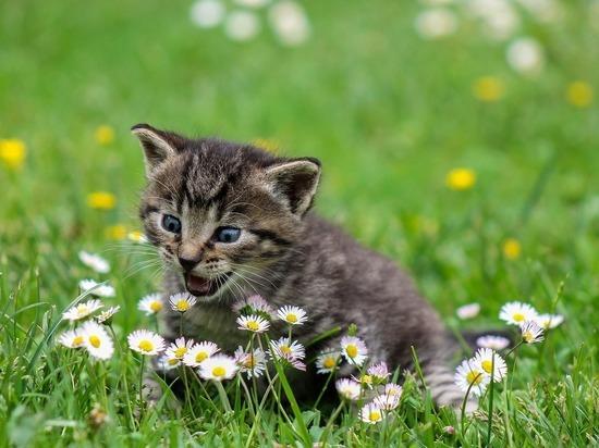 Вдеревне свежей Зеландии хотят на100% запретить котов