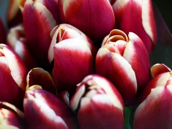 За мошенничество с цветами будут судить приморца