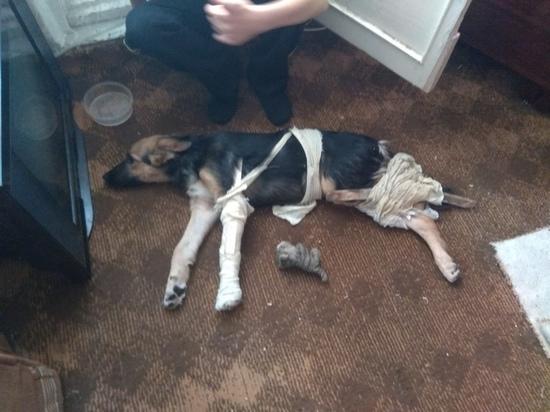 В Челябинске женщина выкинула собаку с 6-го этажа за лифчик