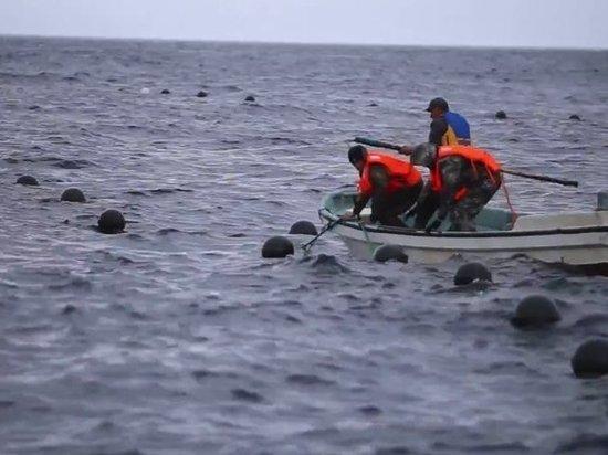 Сотни корейских шхун укрылись в бухтах Приморья