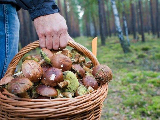 Хабаровские спасатели рассказали, как не заблудиться во время сбора грибов