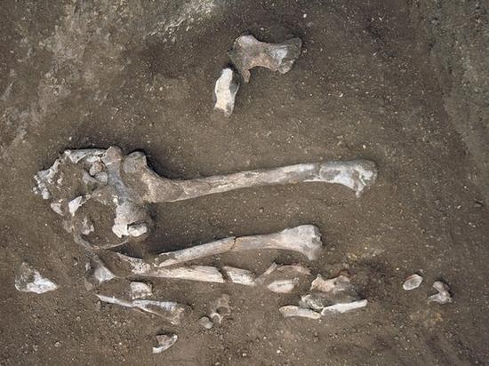 Строительство М-11, проходящую через Тверскую область, приостановили из-за найденных костей