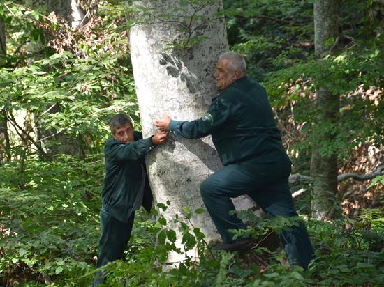 В лесах Ставрополья наблюдается разнообразие растительного мира