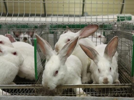 Житель Корсаковского района открыл кроличью ферму