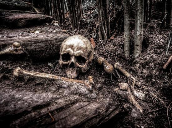 В Ленобласти наткнулись на скелет с жетоном МЧС