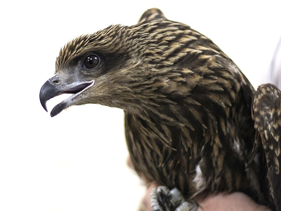 Первая в России супер-клиника для диких животных открыта в Кузбассе