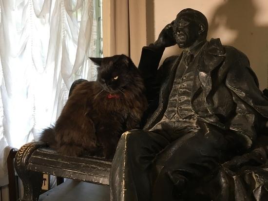 Кота Бегемота из «Булгаковского дома» отправили на пенсию