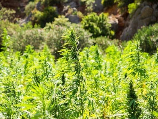 Конопля серпухов влияние марихуана суставы