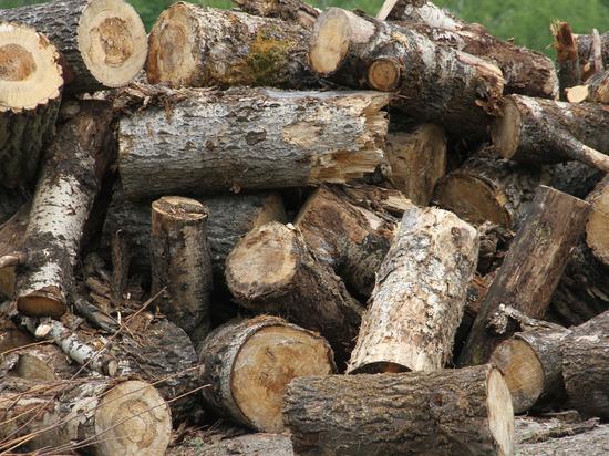 Глава Башкирии: «Воровство леса продолжается и носит достаточно большой характер»