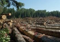 Томский лес незаконно вывозили в Узбекистан и Азербайджан