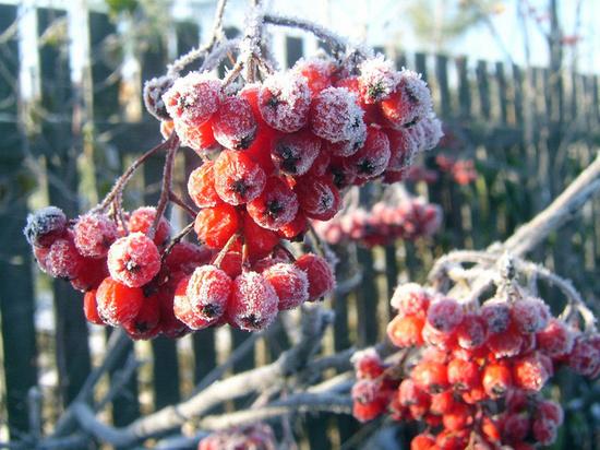 В Тверскую область придут заморозки