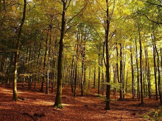 Осень приятно удивит москвичей в конце недели: тепло побьет рекорды