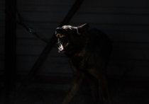 В Калининградской области собака загрызла девочку