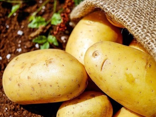 В Роскачестве дали советы по выбору картофеля